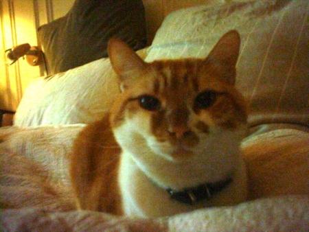 bombasse brune chatte de grosse salope