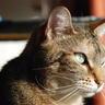 Portrait de aurore712