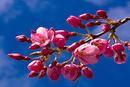 fleurs265.jpg